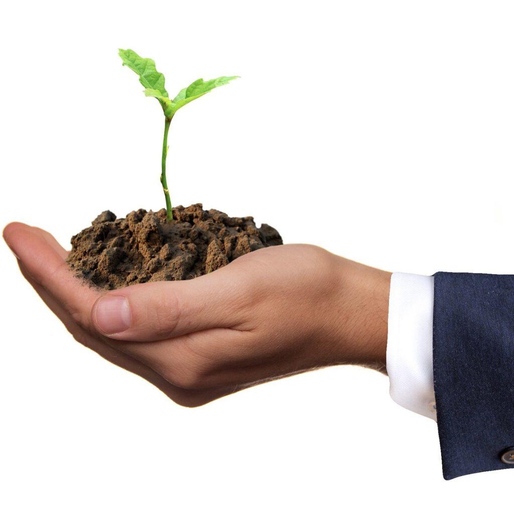 pflanze waechst aus hand